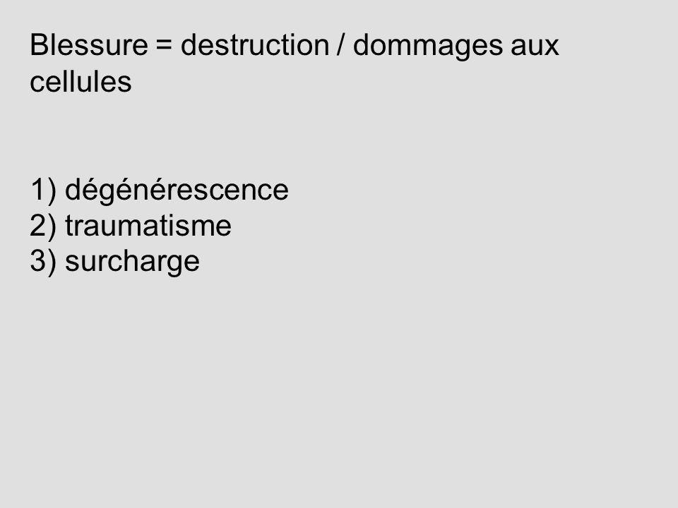 Blessure = destruction / dommages aux cellules