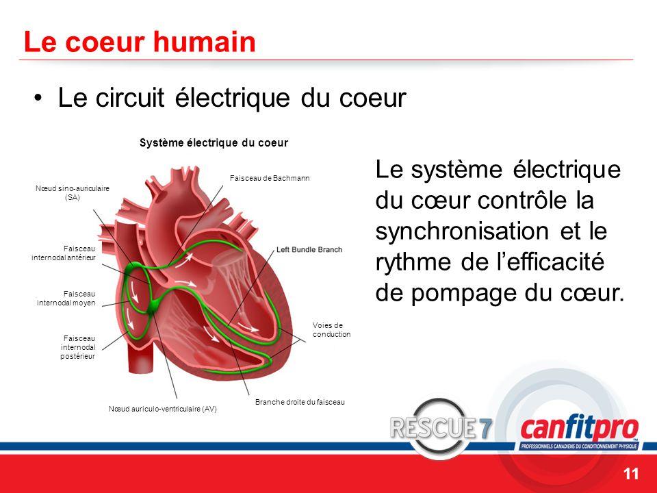 Système électrique du coeur