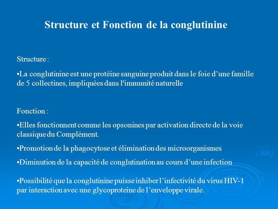 Structure et Fonction de la conglutinine