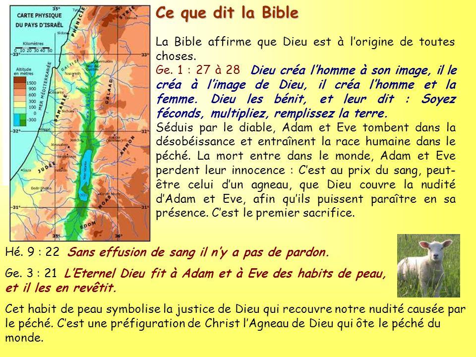 Ce que dit la Bible La Bible affirme que Dieu est à l'origine de toutes choses.