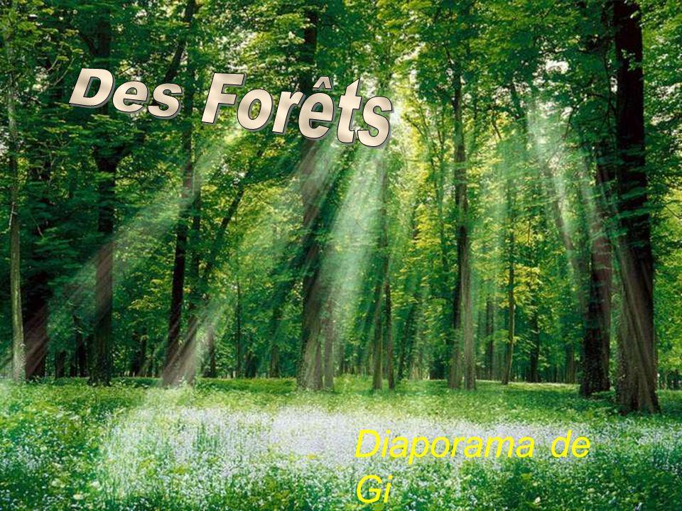 Des Forêts Diaporama de Gi