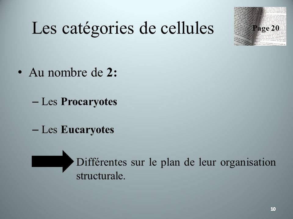 Les catégories de cellules
