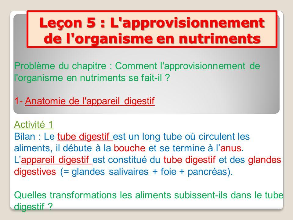 Leçon 5 : L approvisionnement de l organisme en nutriments