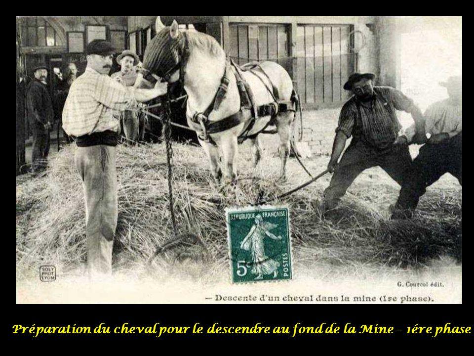 Préparation du cheval pour le descendre au fond de la Mine – 1ére phase