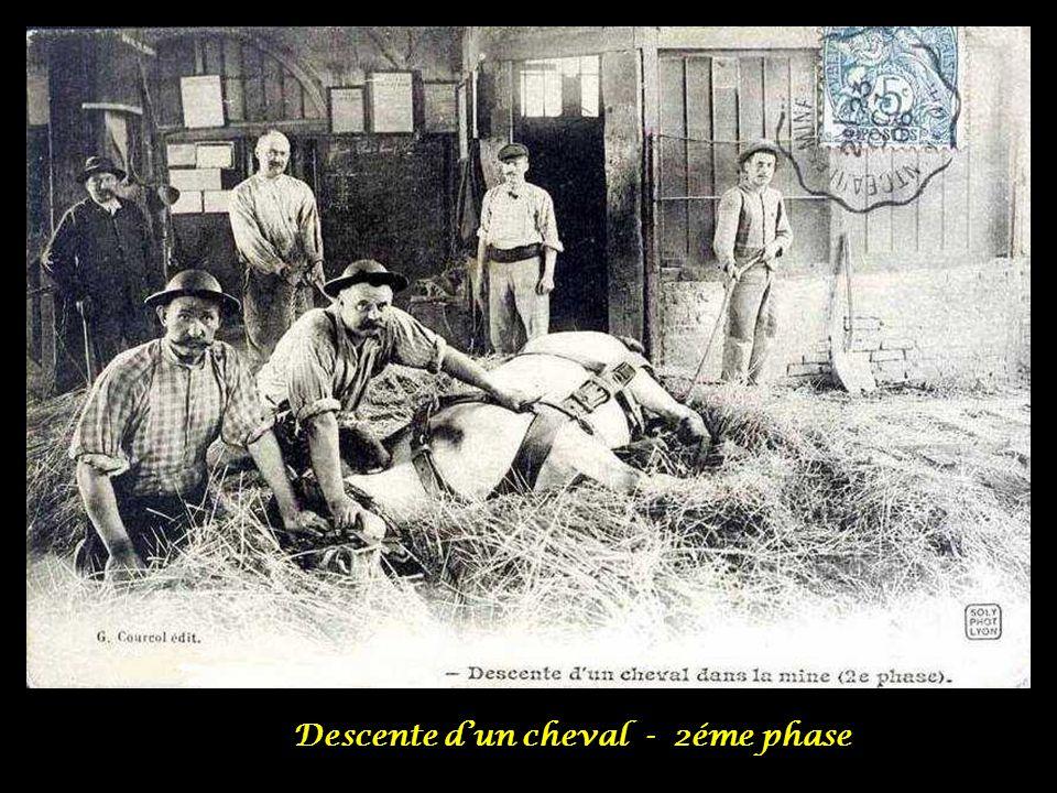 Descente d'un cheval - 2éme phase