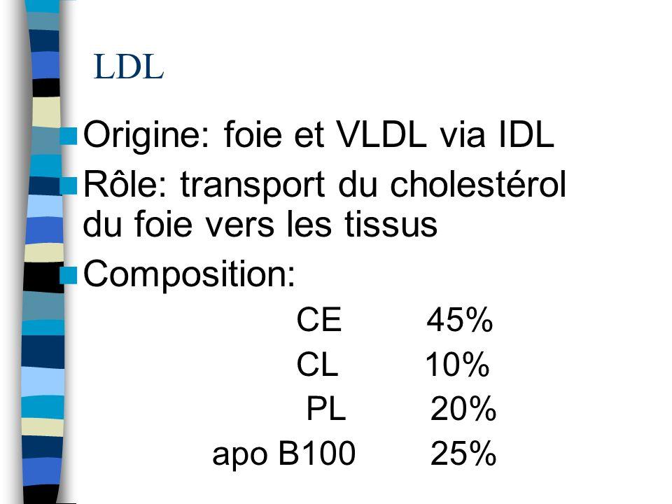 Origine: foie et VLDL via IDL