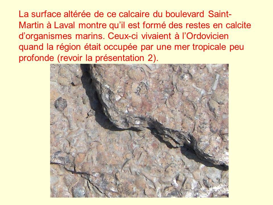 La surface altérée de ce calcaire du boulevard Saint-Martin à Laval montre qu'il est formé des restes en calcite d'organismes marins.