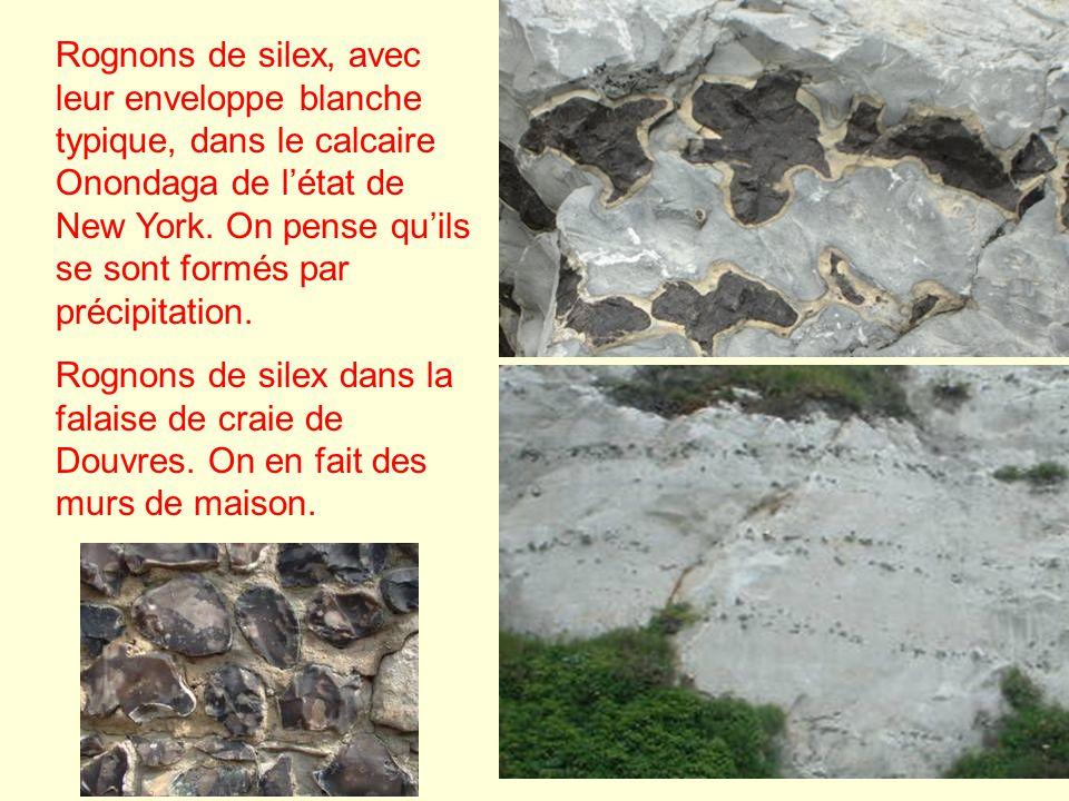 Rognons de silex, avec leur enveloppe blanche typique, dans le calcaire Onondaga de l'état de New York. On pense qu'ils se sont formés par précipitation.
