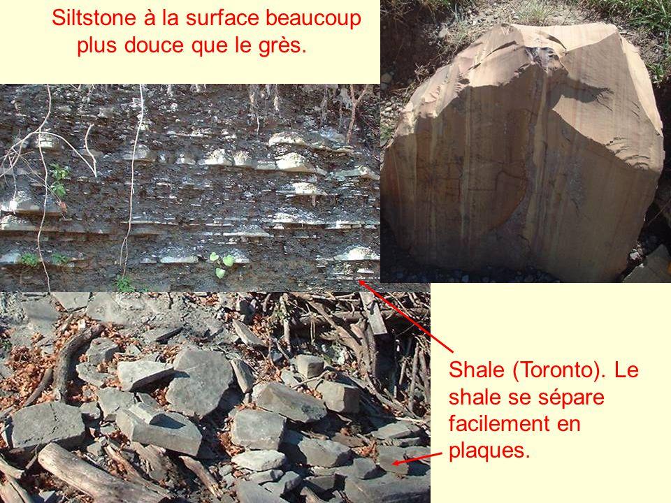 Siltstone à la surface beaucoup plus douce que le grès.