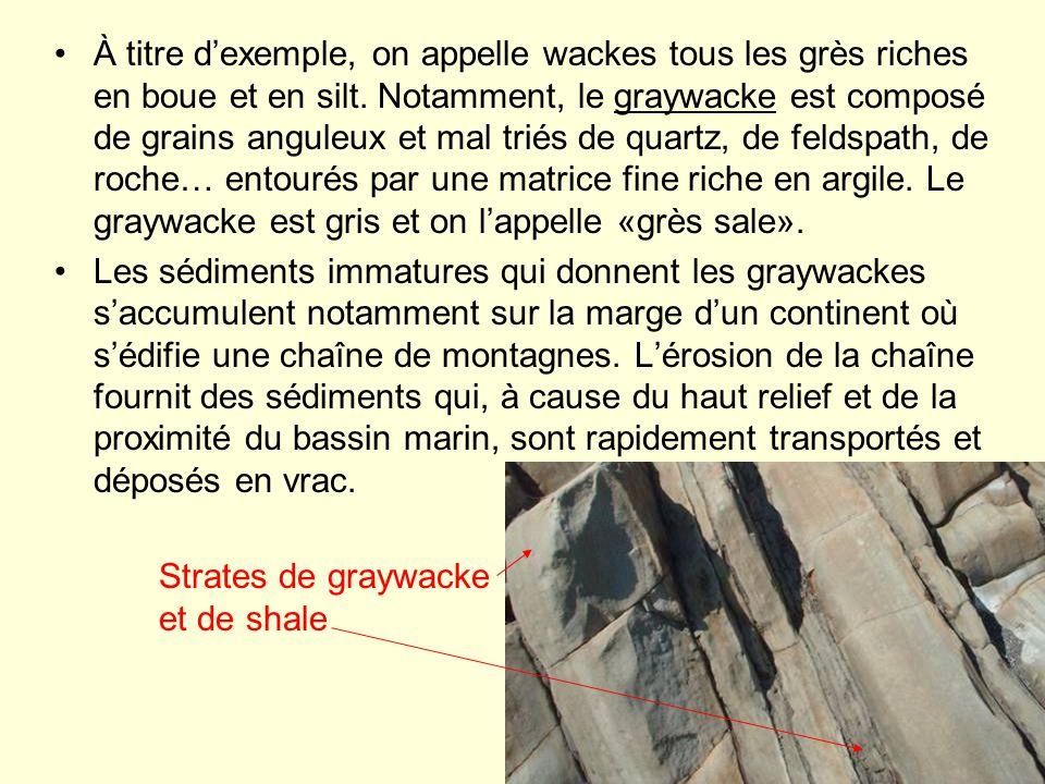 À titre d'exemple, on appelle wackes tous les grès riches en boue et en silt. Notamment, le graywacke est composé de grains anguleux et mal triés de quartz, de feldspath, de roche… entourés par une matrice fine riche en argile. Le graywacke est gris et on l'appelle «grès sale».