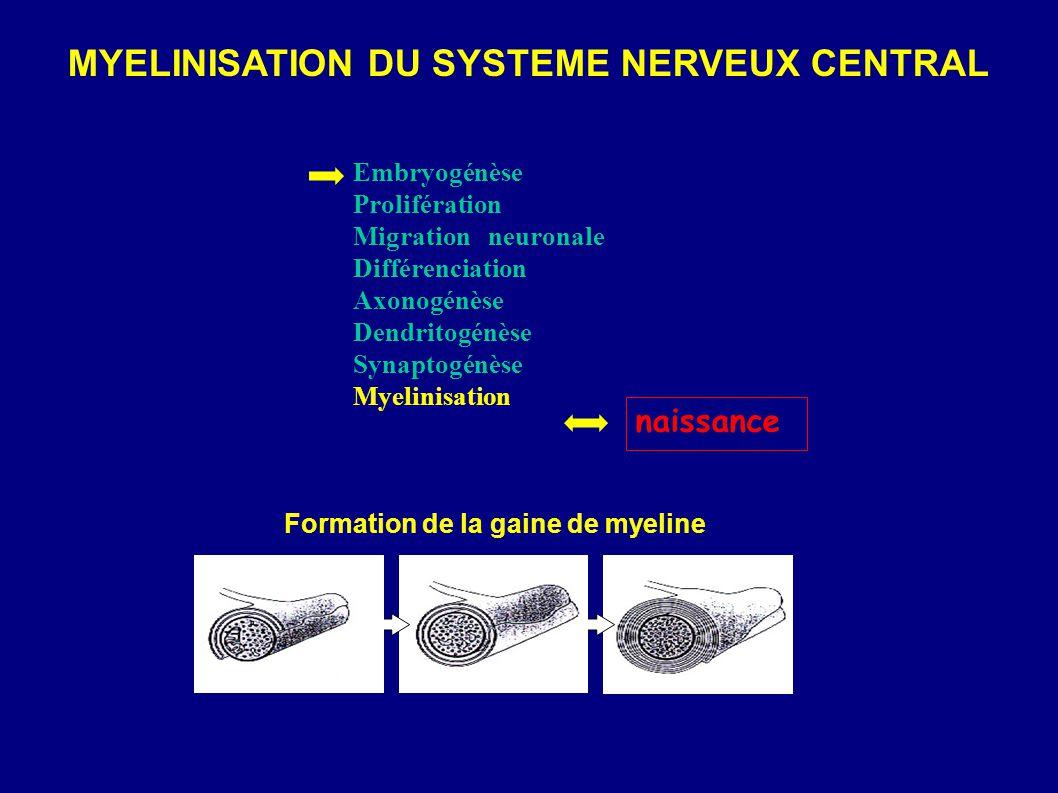 MYELINISATION DU SYSTEME NERVEUX CENTRAL