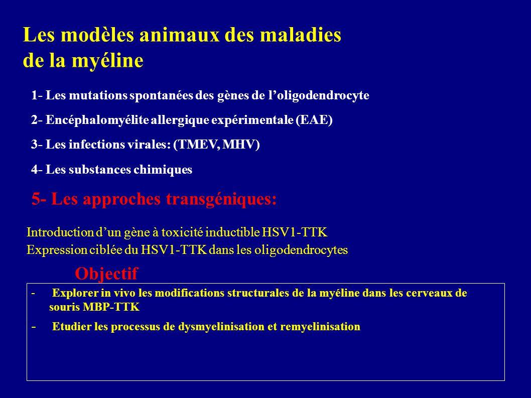 Les modèles animaux des maladies de la myéline