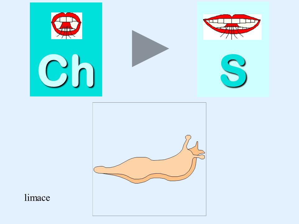 Ch S limace limace