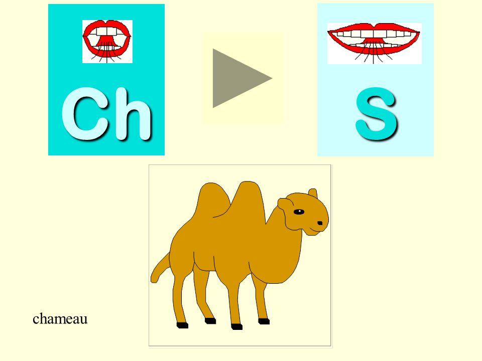 Ch S chameau chameau