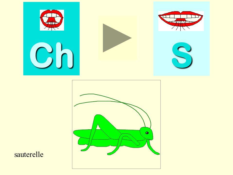 Ch S sauterelle sauterelle