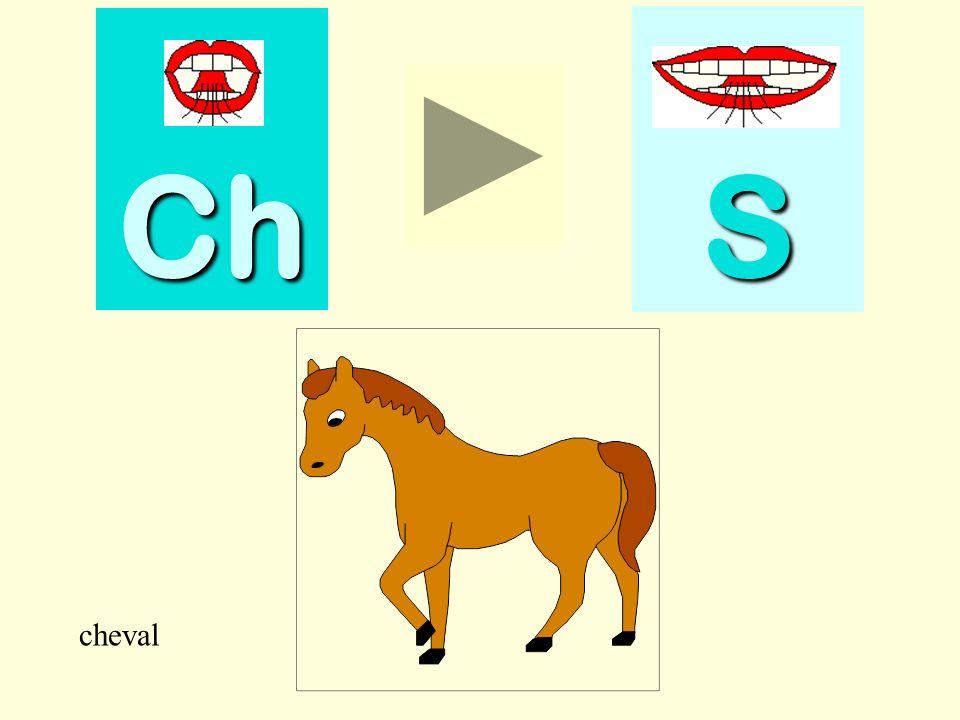 Ch S cheval cheval
