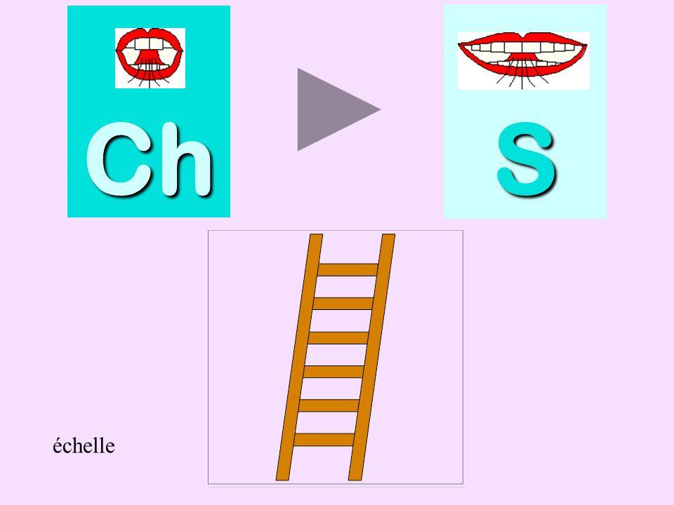 Ch S échelle échelle