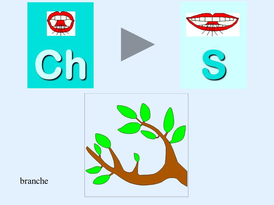 Ch S branche branche