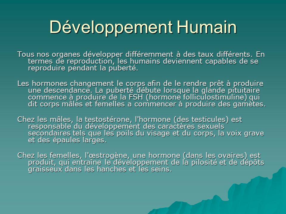Développement Humain