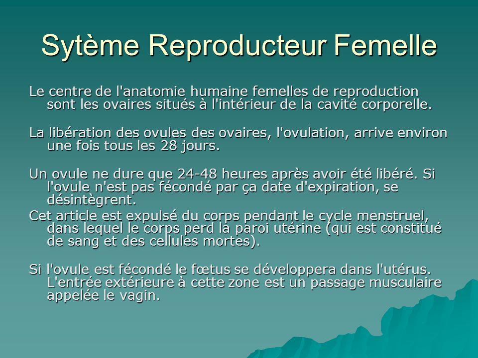 Sytème Reproducteur Femelle