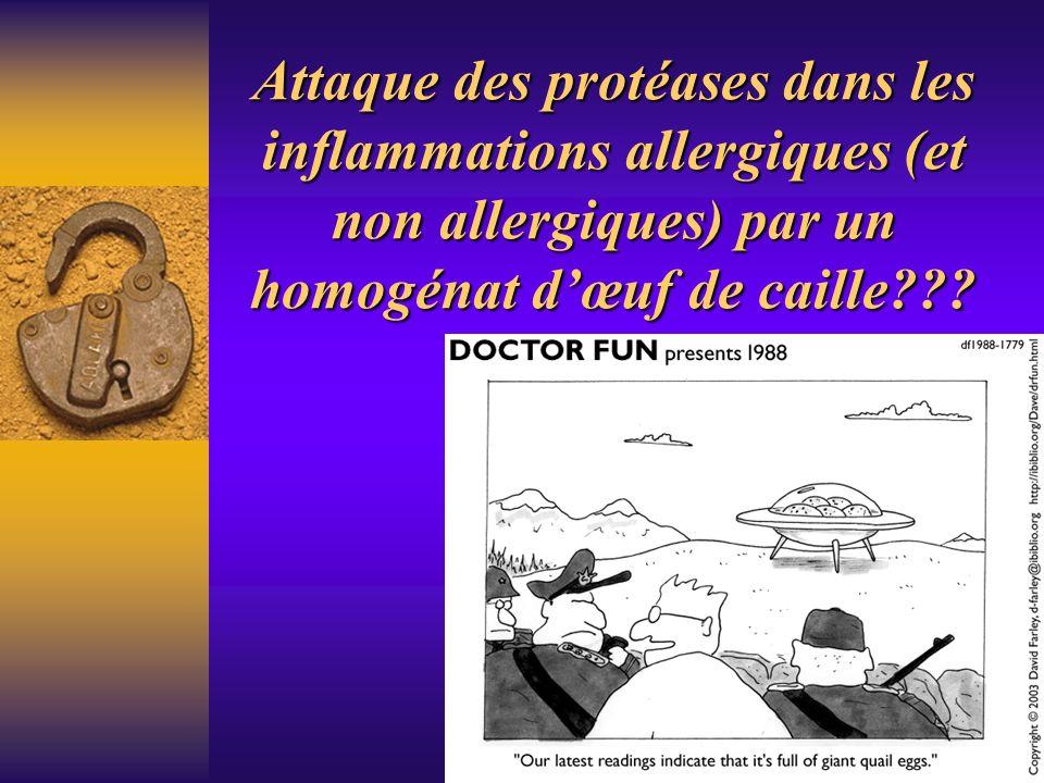 Attaque des protéases dans les inflammations allergiques (et non allergiques) par un homogénat d'œuf de caille