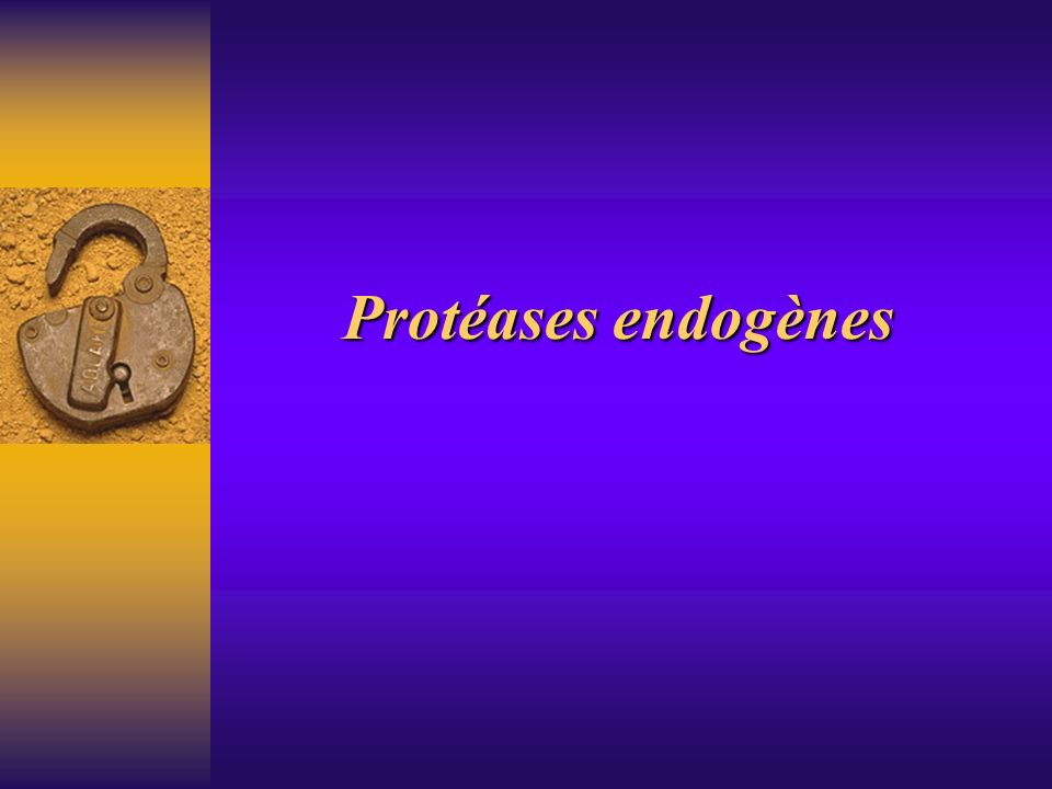 Protéases endogènes