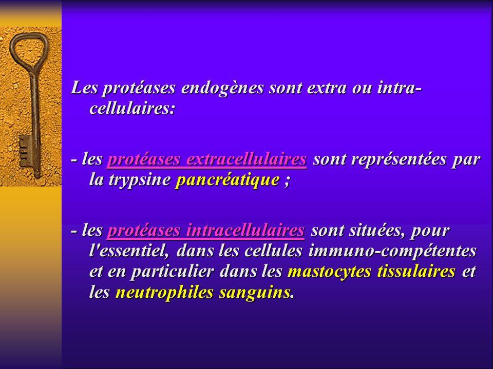 Les protéases endogènes sont extra ou intra-cellulaires: