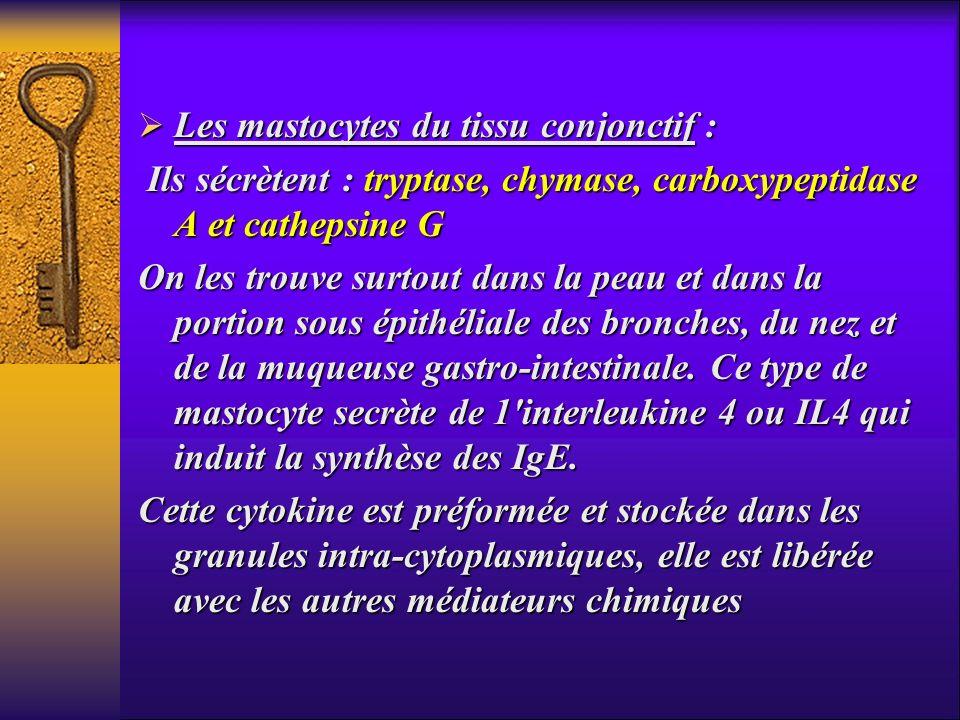 Les mastocytes du tissu conjonctif :