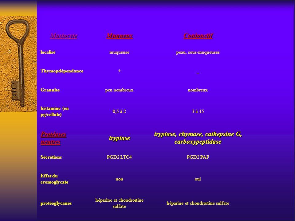tryptase, chymase, cathepsine G, carboxypeptidase
