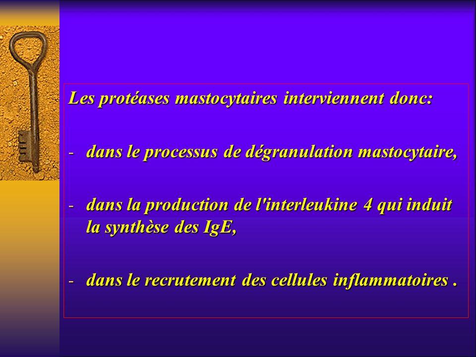 Les protéases mastocytaires interviennent donc: