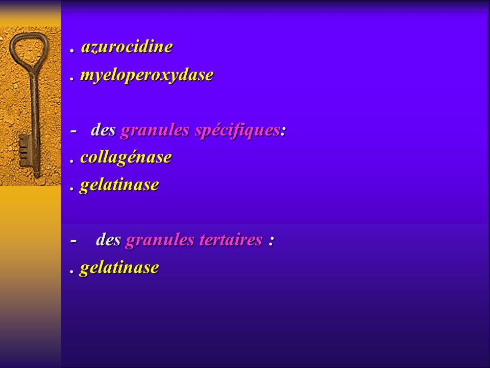 . azurocidine . myeloperoxydase - des granules spécifiques: