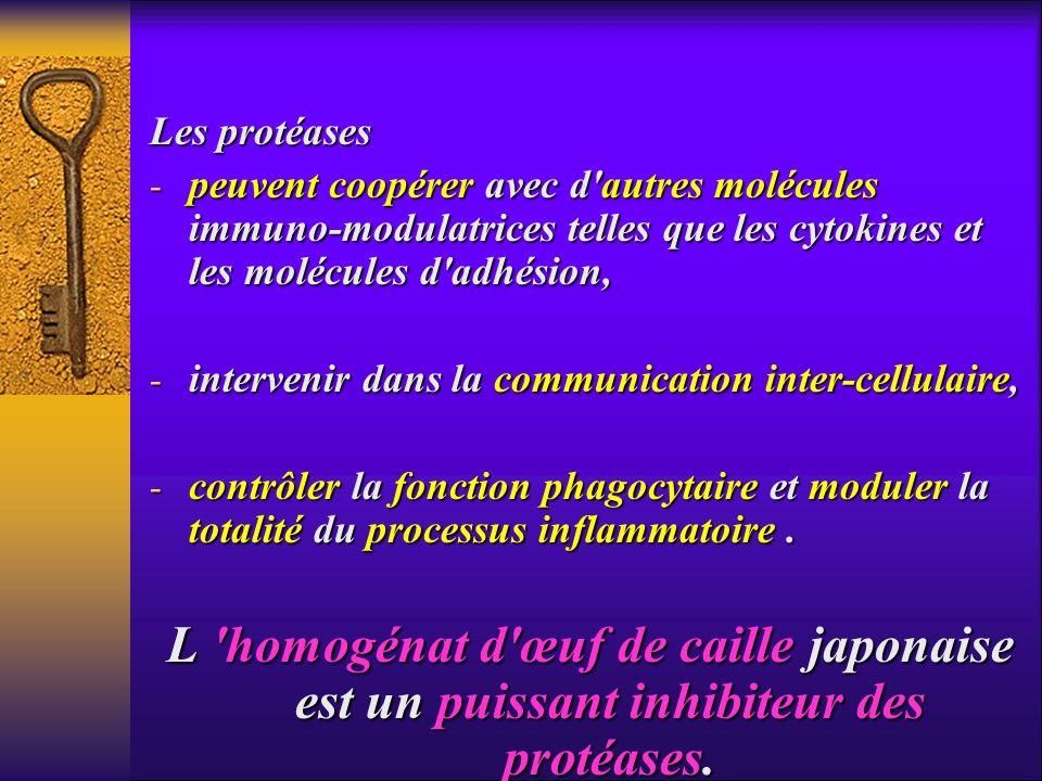 Les protéases peuvent coopérer avec d autres molécules immuno-modulatrices telles que les cytokines et les molécules d adhésion,