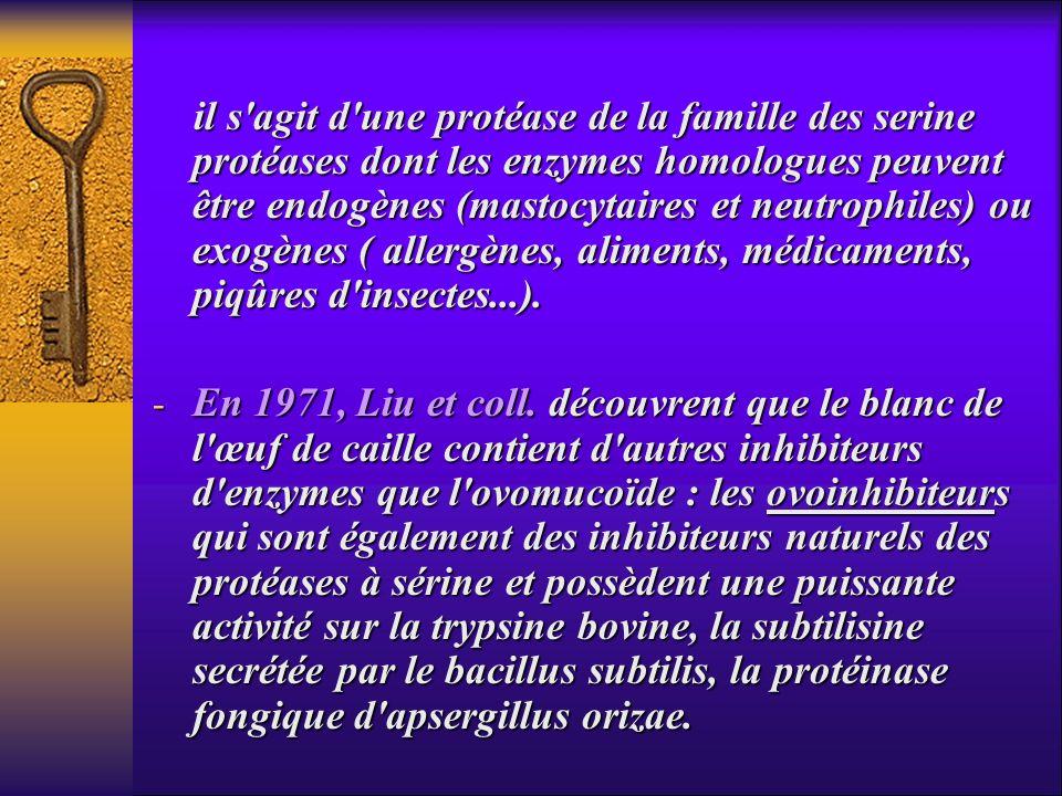 il s agit d une protéase de la famille des serine protéases dont les enzymes homologues peuvent être endogènes (mastocytaires et neutrophiles) ou exogènes ( allergènes, aliments, médicaments, piqûres d insectes...).