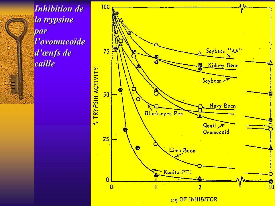 Inhibition de la trypsine par l'ovomucoïde d'œufs de caille