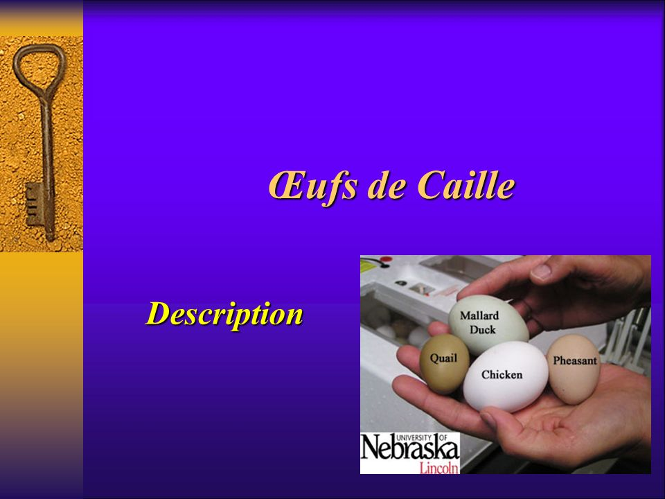 Œufs de Caille Description