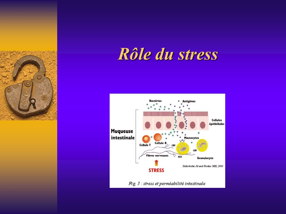 Rôle du stress