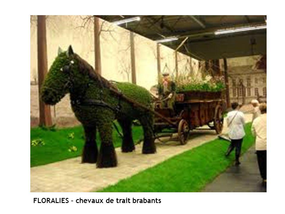 FLORALIES – chevaux de trait brabants