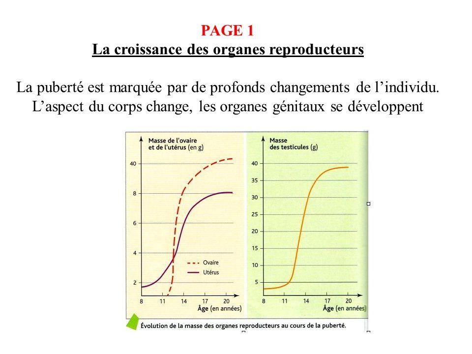 La croissance des organes reproducteurs