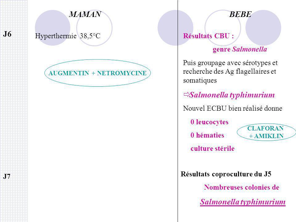 AUGMENTIN + NETROMYCINE Nombreuses colonies de Salmonella typhimurium