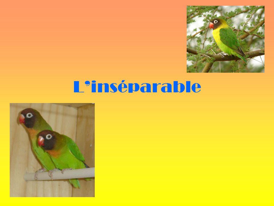L'inséparable