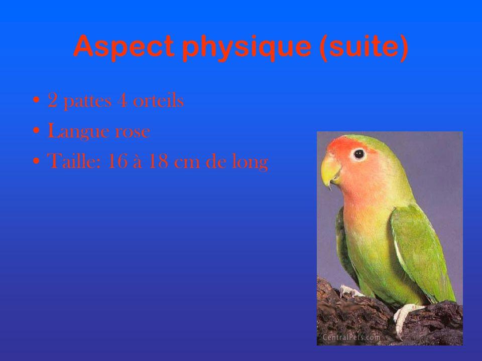 Aspect physique (suite)