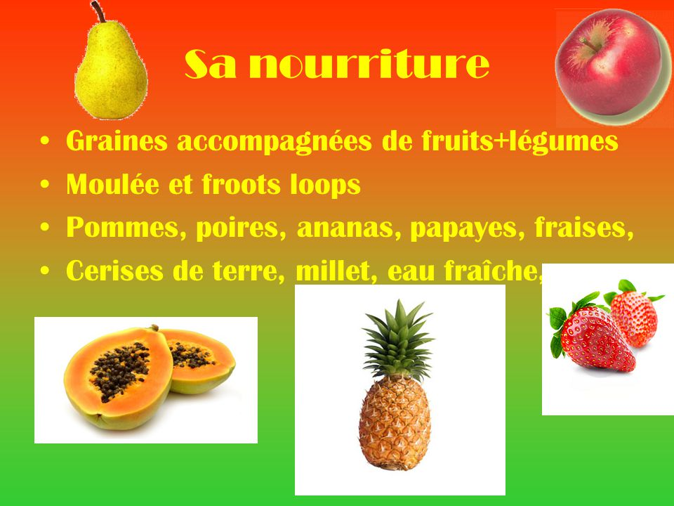 Sa nourriture Graines accompagnées de fruits+légumes