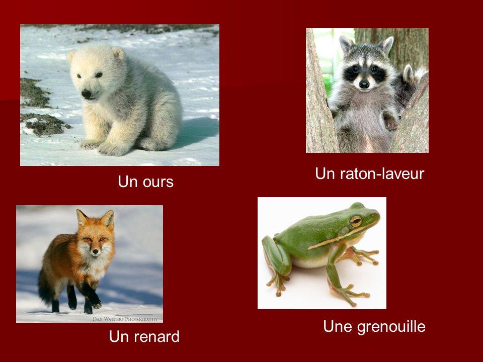 Un raton-laveur Un ours Une grenouille Un renard