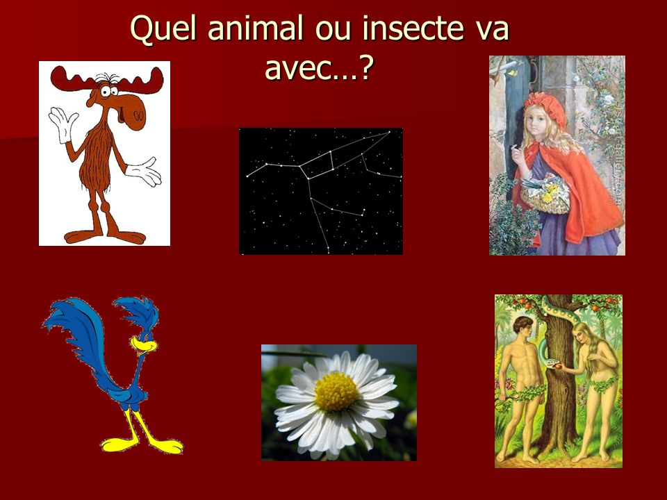 Quel animal ou insecte va avec…