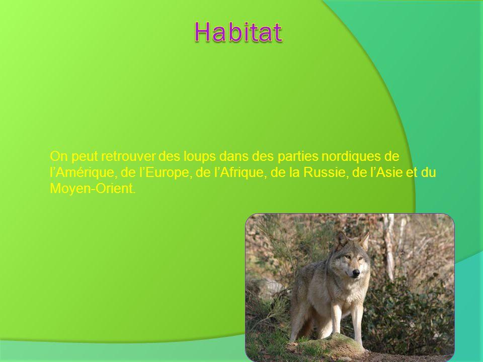 Habitat On peut retrouver des loups dans des parties nordiques de l'Amérique, de l'Europe, de l'Afrique, de la Russie, de l'Asie et du Moyen-Orient.