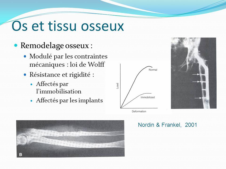 Os et tissu osseux Remodelage osseux :