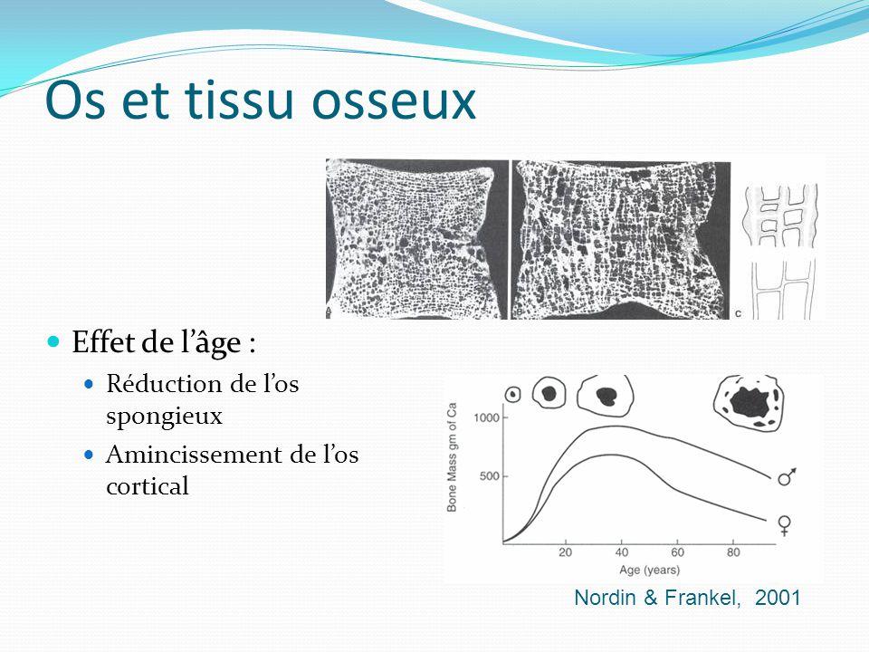 Os et tissu osseux Effet de l'âge : Réduction de l'os spongieux