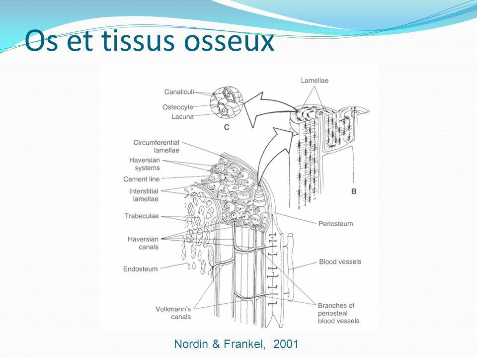 Os et tissus osseux Nordin & Frankel, 2001