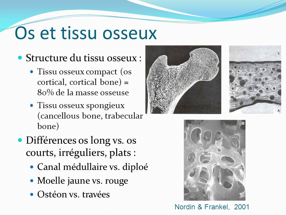 Os et tissu osseux Structure du tissu osseux :
