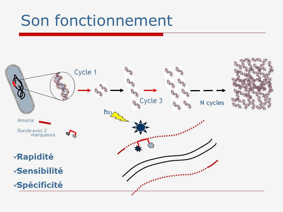 Son fonctionnement Rapidité Sensibilité Spécificité Cycle 1 Cycle 3 h
